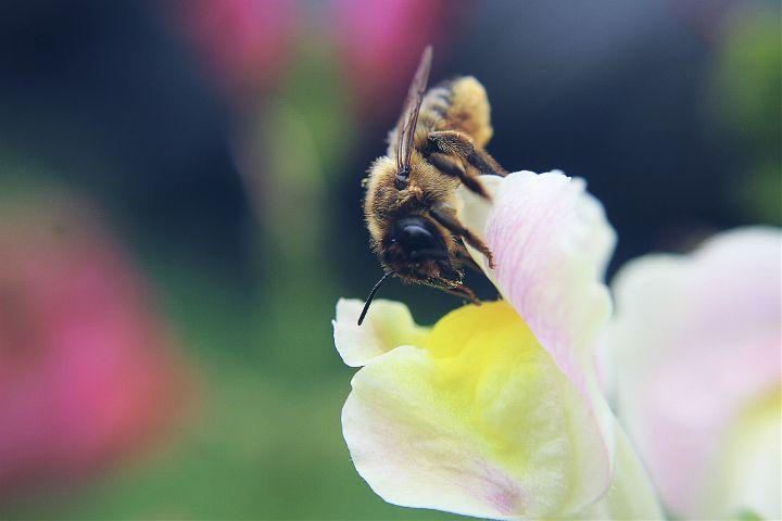 nature,bee,sharpen,dodger,summer