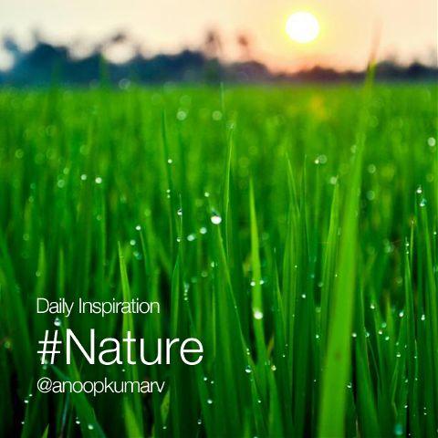 dailyinspirations nature