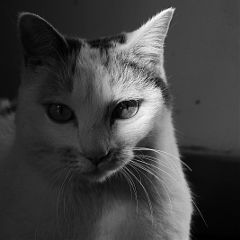 photography blackandwhite kitty mansbestfriends petsandanimals