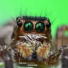 macro nature petsandanimals spider photography