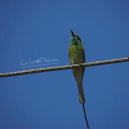 photooftheday birds