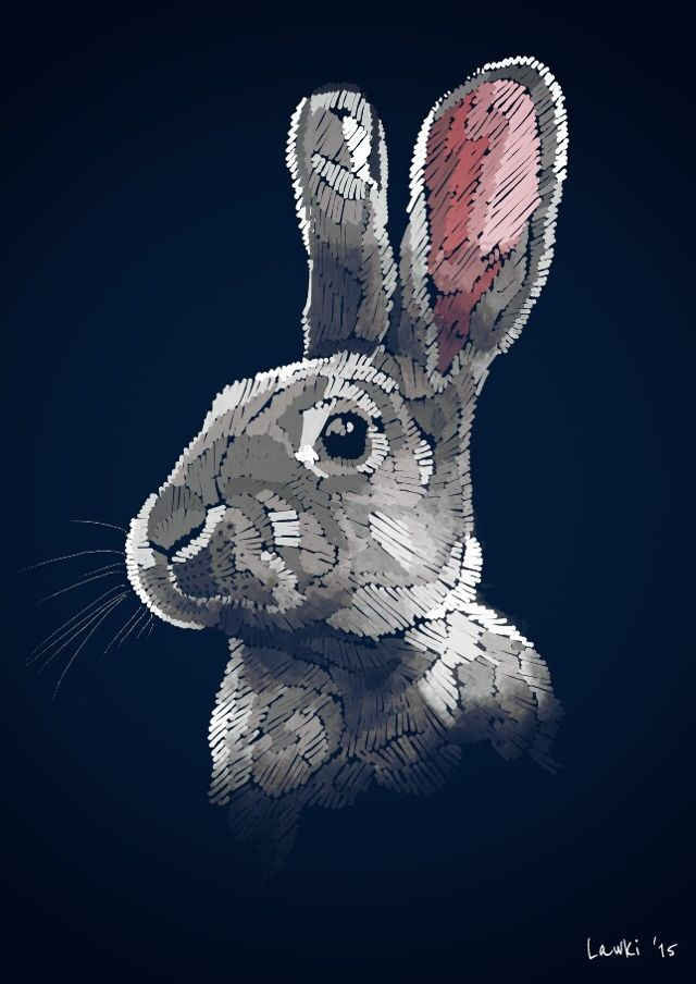 bunny drawing contest winner