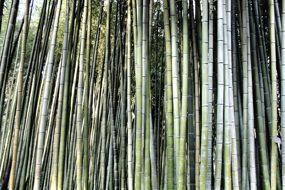 #stripes #plant #nature #hdr #photography #bamboo