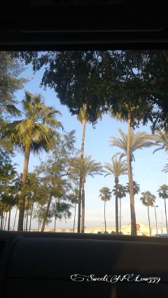 nature oldphoto spring palmtrees green