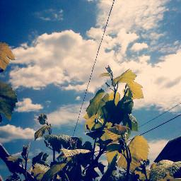 spring beautiful nature sky my