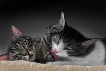 drawing digitaldrawing petsandanimals cat cats