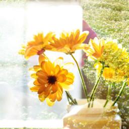 editing yellow_flower