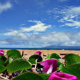 flower nature beach ocean island