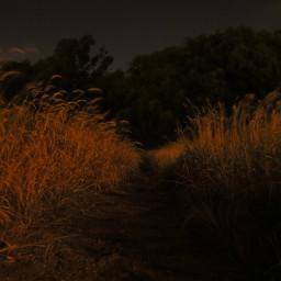 night alone grass nature