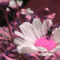 waphue bee summer pink hue
