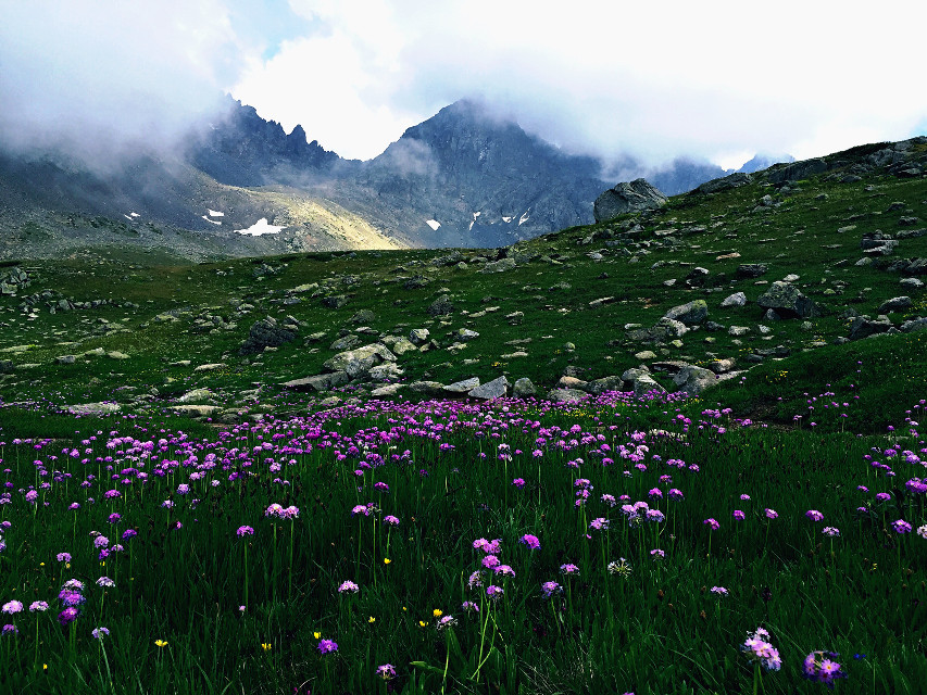 #vibrant  #vibranteffect  #nature  #flower  #mountain  #turkey  #travel  Türkiye/rize (kaçkar dağları-yedigöller)