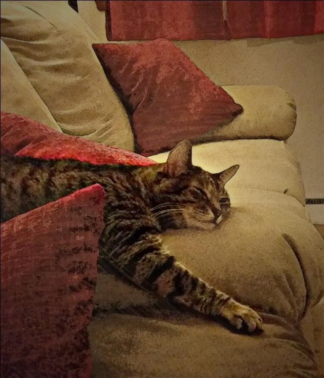 Cat nap #petsandanimals  #oldpaper #