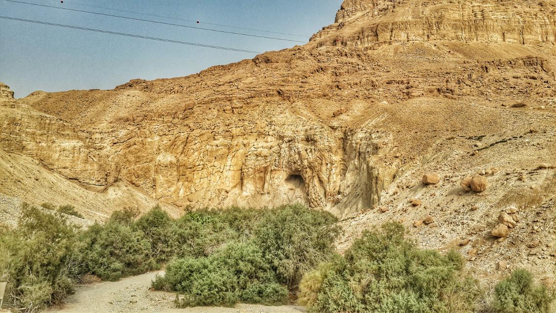 Oasis in the desert   #travel #nature  #Israel #desert