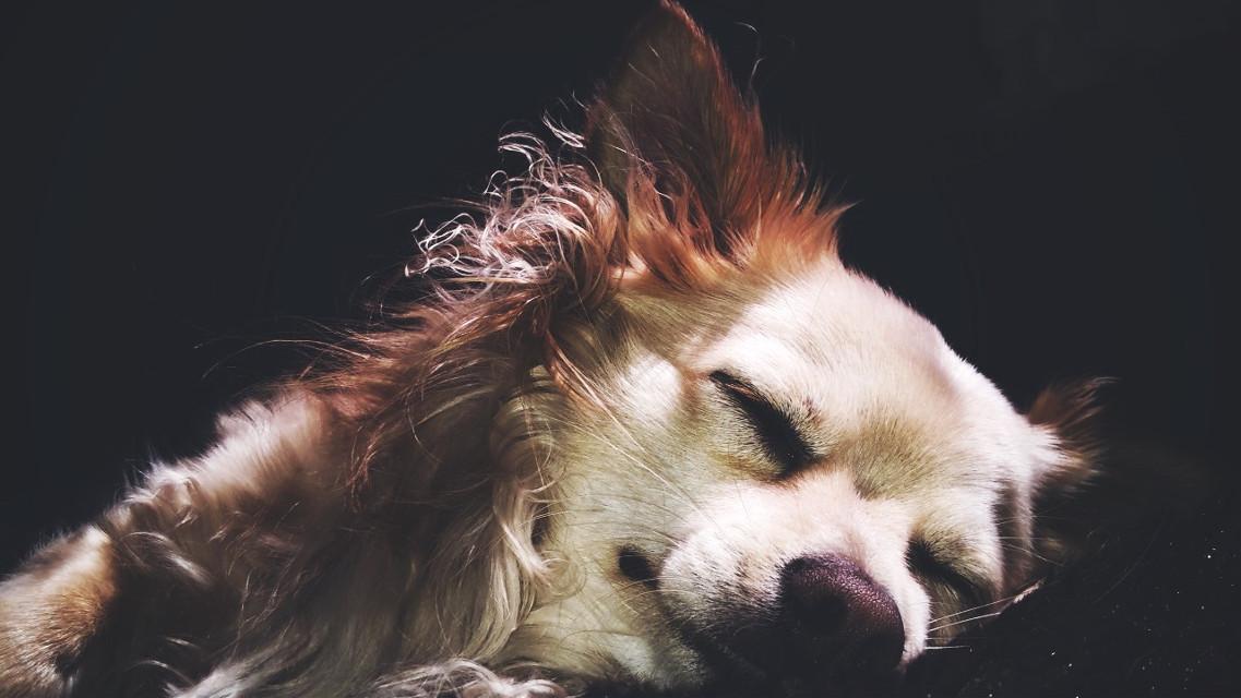 #cute #petsandanimals #photography #dog  #drama