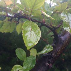 rain leaf water green nature