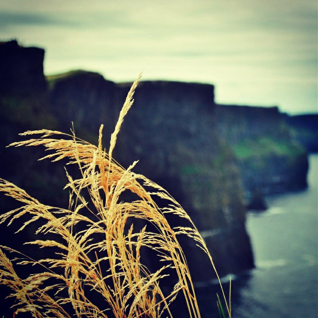 #cliffs #cliffsofmoher #ireland #nature #landscape #