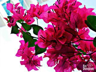 flower pink green vibrant nature