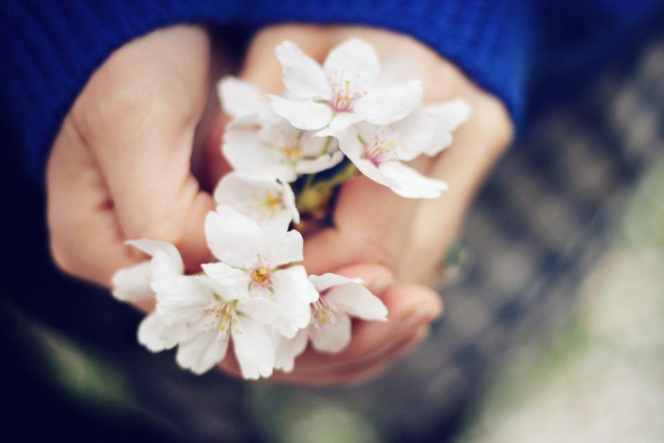 #cherryblossom #flower