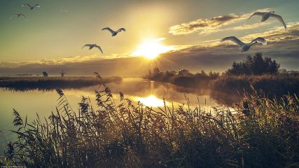 sunrise swan windmill netherlands landscape nature