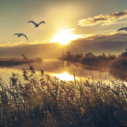 sunrise swan windmill netherlands landscape nature