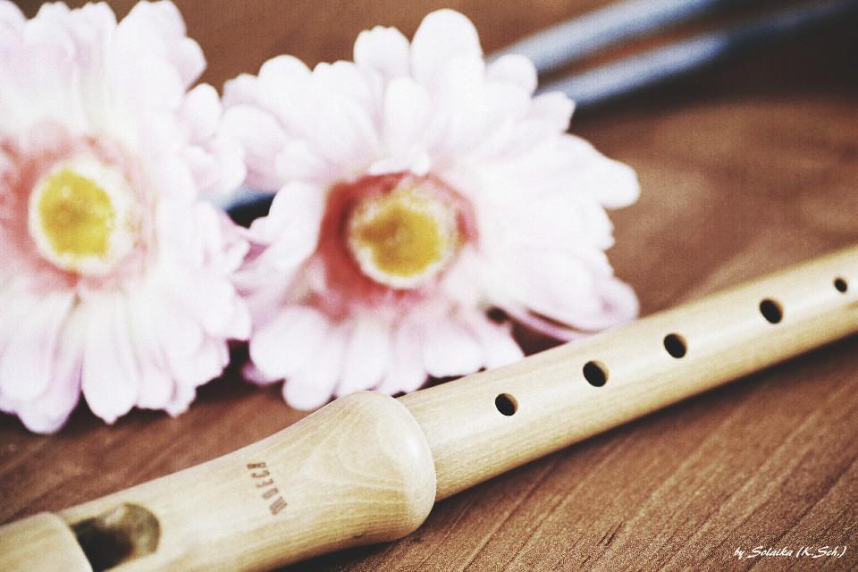 #flower #photography #music  #Drama  #decoration   Good morning