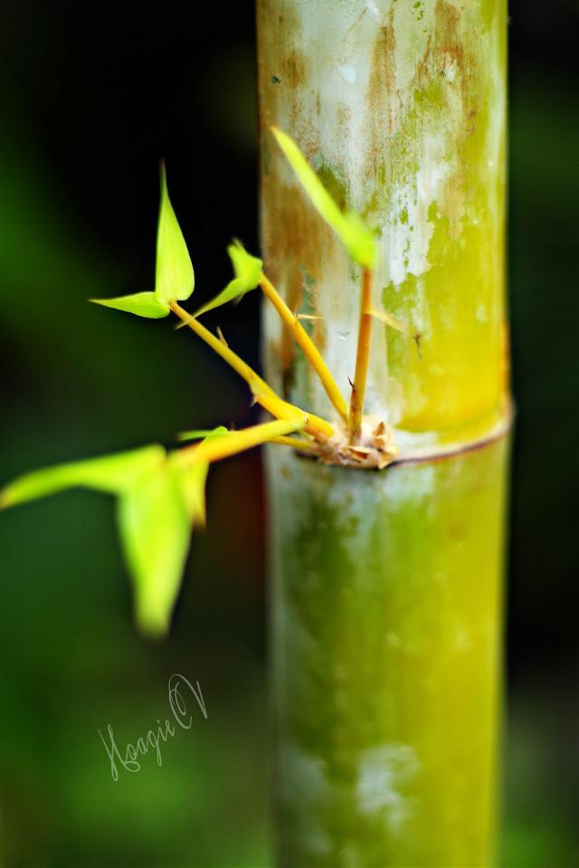 # bamboo