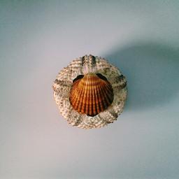 freetoedit seashells vintage photography minimalism