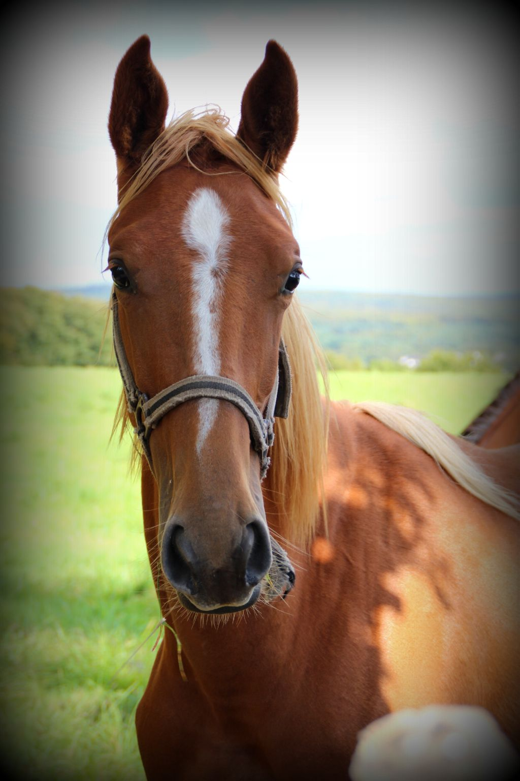 Mon modèle  ☺ #nature  #photography  #automne # cheval